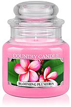 "Parfumuri și produse cosmetice Lumânare aromată ""Blooming Plumeria"" (borcan) - Country Candle Blooming Plumeria"
